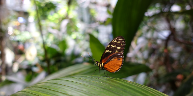 Butterfly at California Academy of Sciences