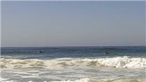 Dolphins at Fort Funston