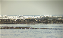 Harbor seals resting at the Fitzgerald Marine Reserve in San Mateo, California