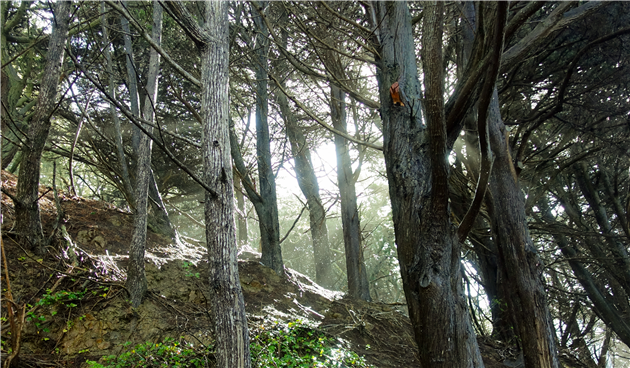 Trees at Lands End