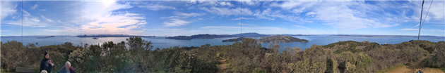 Turkey Vultures on Angel Island