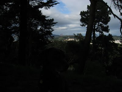 Top of Strawberry Hill in the middle of Stow Lake