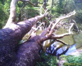 Turtles on Tree at Golden Gate Park